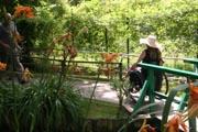 Woman-in-wheelchair-in-Monets-Garden