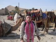 Before-camel-caravan-starts,-Palmyra-Syria