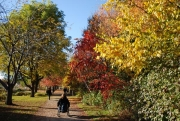 Woman-in-wheelchair-in-park-during-fall