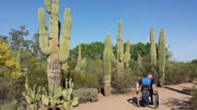 Man-using-wheelchair-exploring-desert-national-park