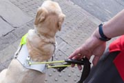 Vision-impaired-man-and-guide-dog-prepare-to-cross-road