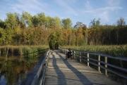 Woman-in-wheelchair-on-boardwalk-over-wetland