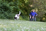 Man-in-wheelchair-walking-his-dog-through-the-forest