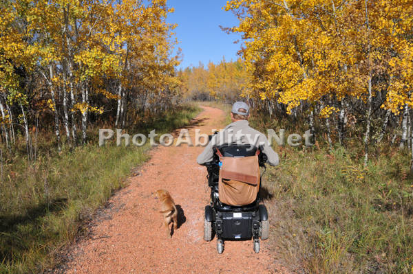 Man using a power wheelchair on a forest path with his dogs