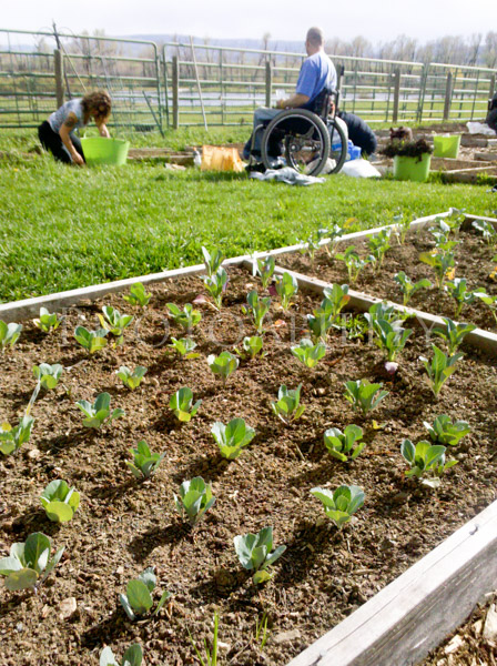 Man using a wheelchair planting seedlings