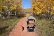 Man-using-power-wheelchair-on-forest-path-with-his-dogs