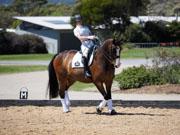 Boneo-Park,-Melbourne,-Australia.-18-October,-2017.-Equestrian-Australia-Para-Equestrian-Grade-3-Individual-Competition.-Wasabi-Sun-ridden-by-Emma-Booth